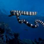 ¿Conoces a los animales acuáticos más temidos?